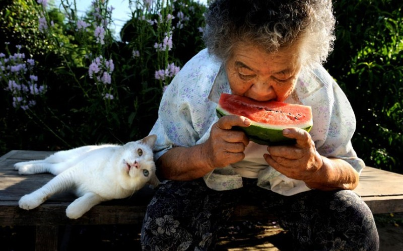 Photo Series of the Bond Between a Grandmother and Her Odd-eyed White Cat